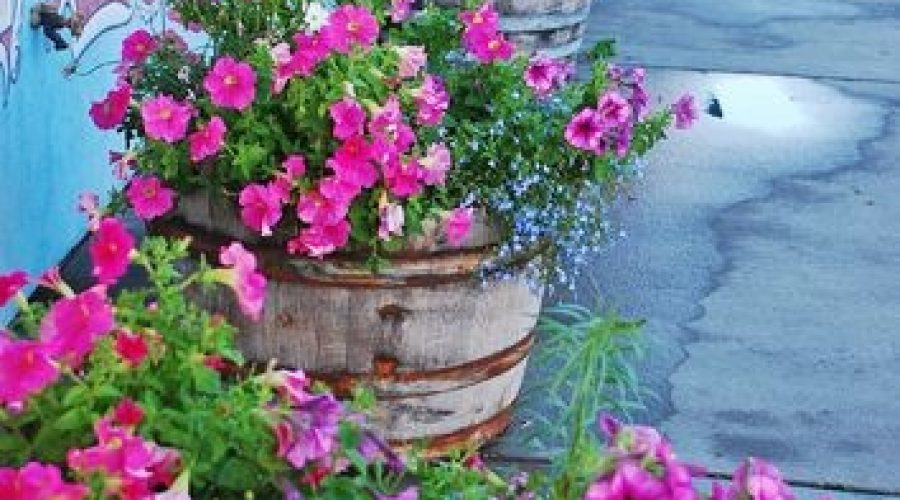 Kitting Planters & Hanging Baskets