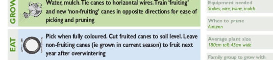 Plant care instructions