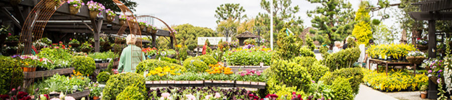 How a California Home Gardening Store Adapted to the Pandemic with Ecommerce